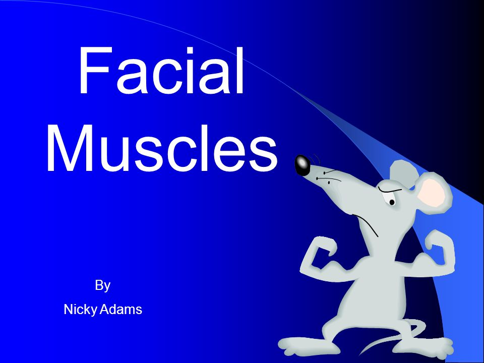Facial Muscles By Nicky Adams