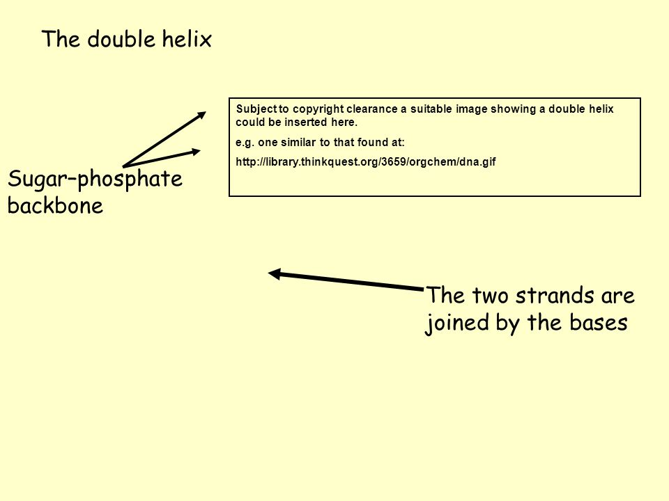 Sugar–phosphate backbone The two strands are joined by the bases The double helix Subject to copyright clearance a suitable image showing a double hel