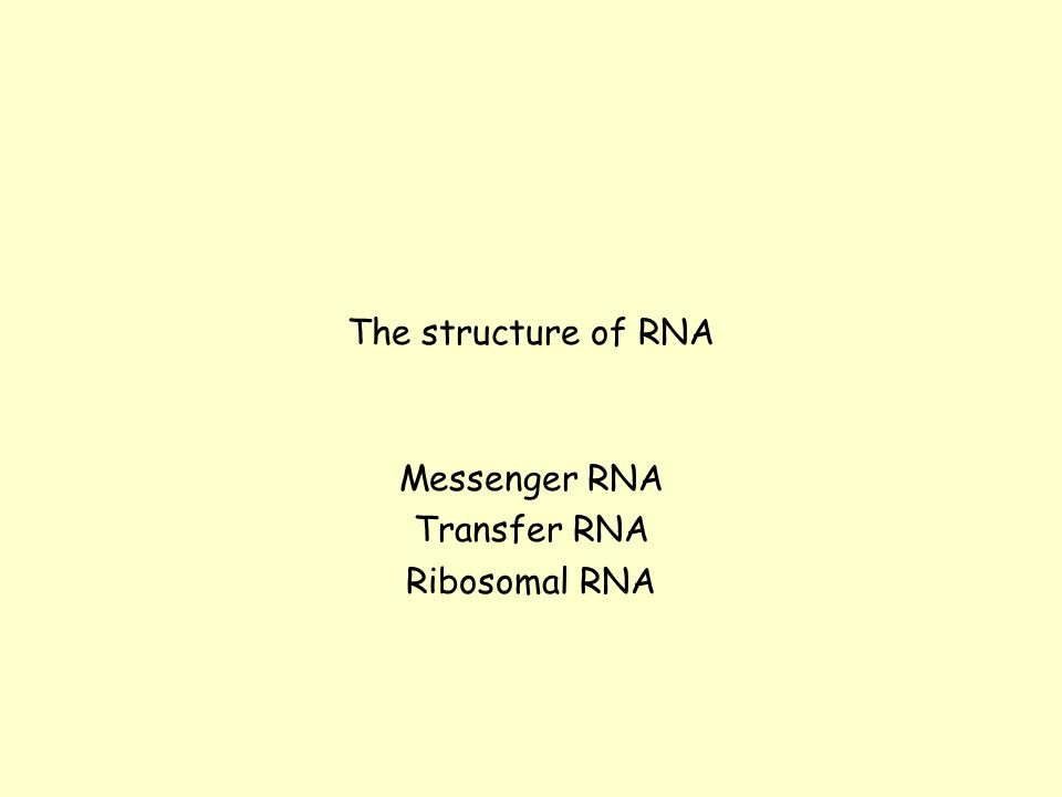 The structure of RNA Messenger RNA Transfer RNA Ribosomal RNA