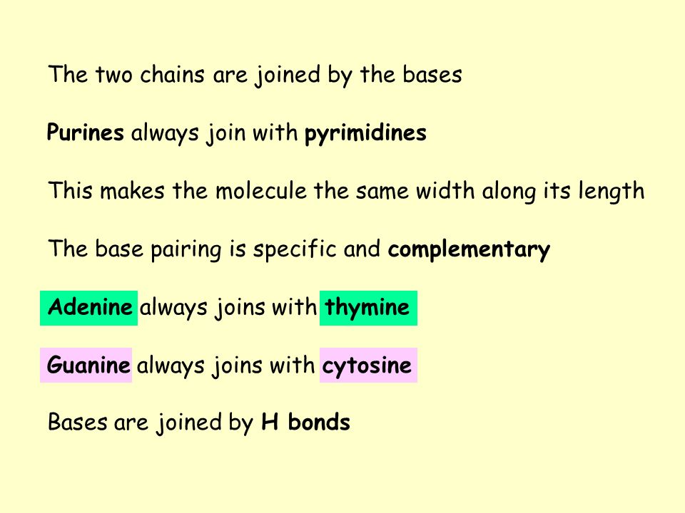 The two chains are joined by the bases The base pairing is specific and complementary Adenine always joins with thymine Guanine always joins with cyto