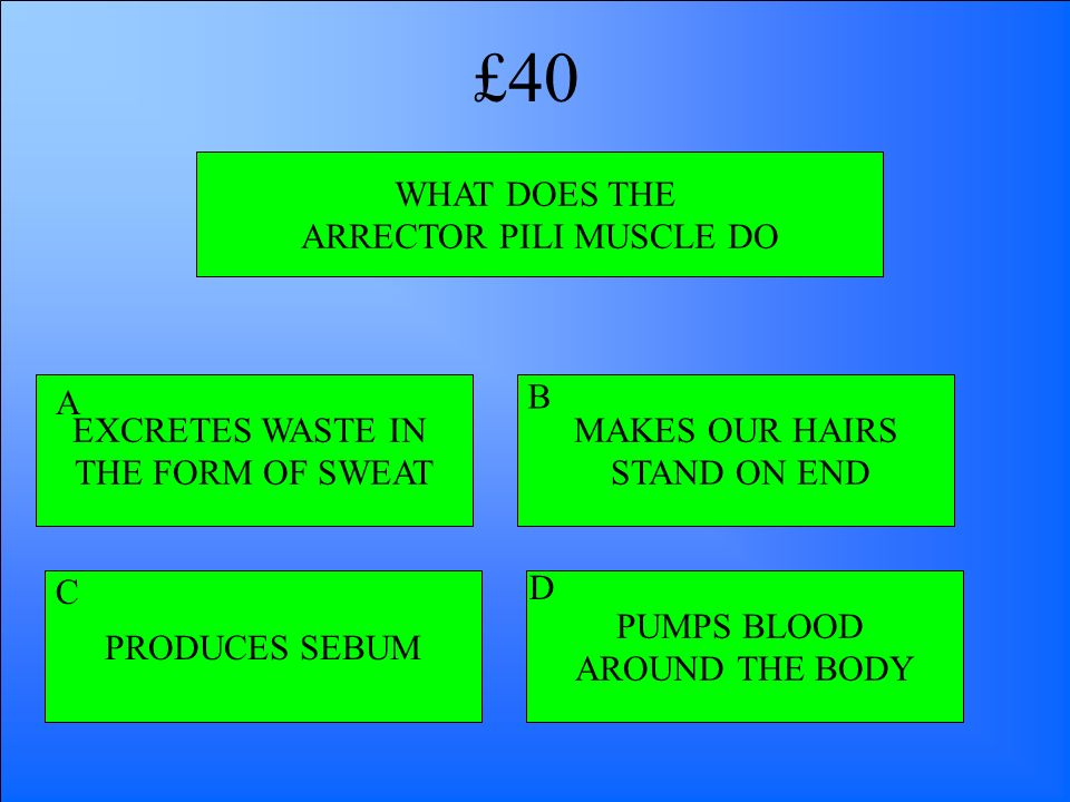 WHAT DOES THE ARRECTOR PILI MUSCLE DO EXCRETES WASTE IN THE FORM OF SWEAT PRODUCES SEBUM PUMPS BLOOD AROUND THE BODY MAKES OUR HAIRS STAND ON END A B