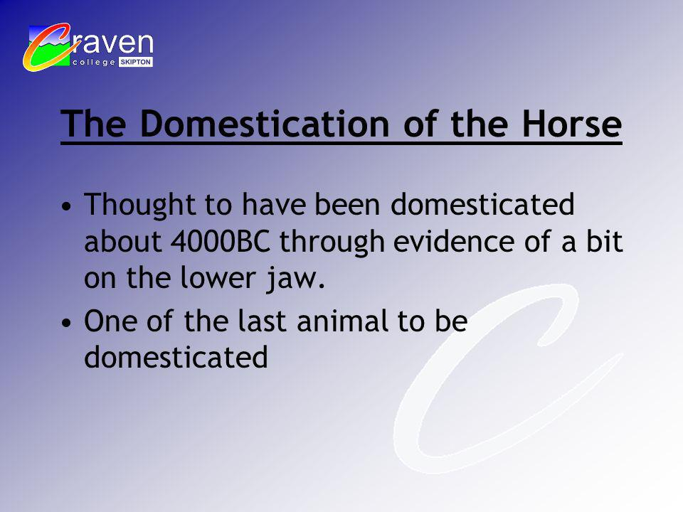 The Domestication of the Horse Thought to have been domesticated about 4000BC through evidence of a bit on the lower jaw. One of the last animal to be