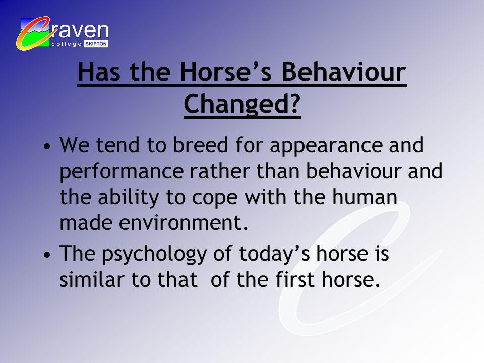 Has the Horses Behaviour Changed? We tend to breed for appearance and performance rather than behaviour and the ability to cope with the human made en