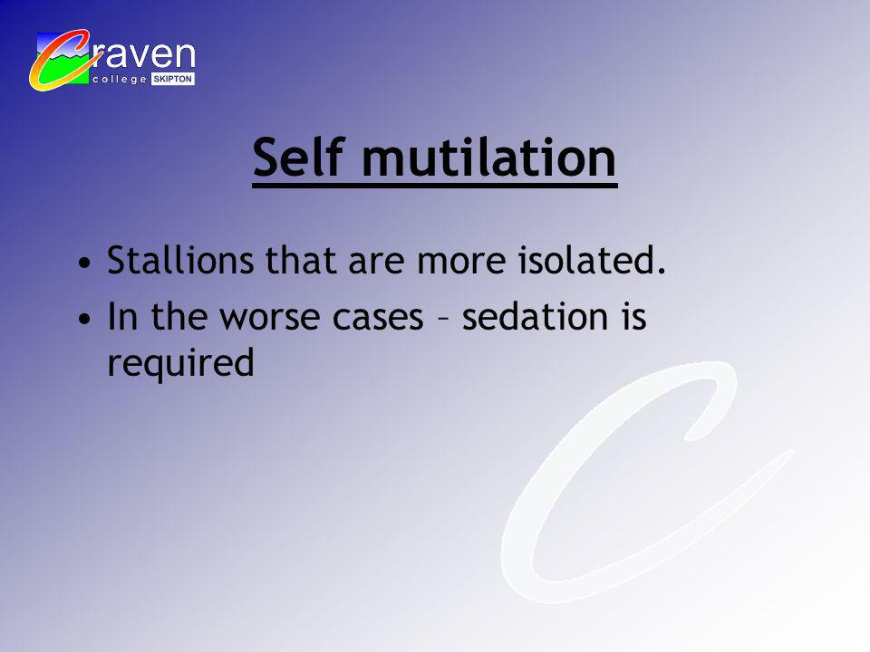 Self mutilation Stallions that are more isolated. In the worse cases – sedation is required