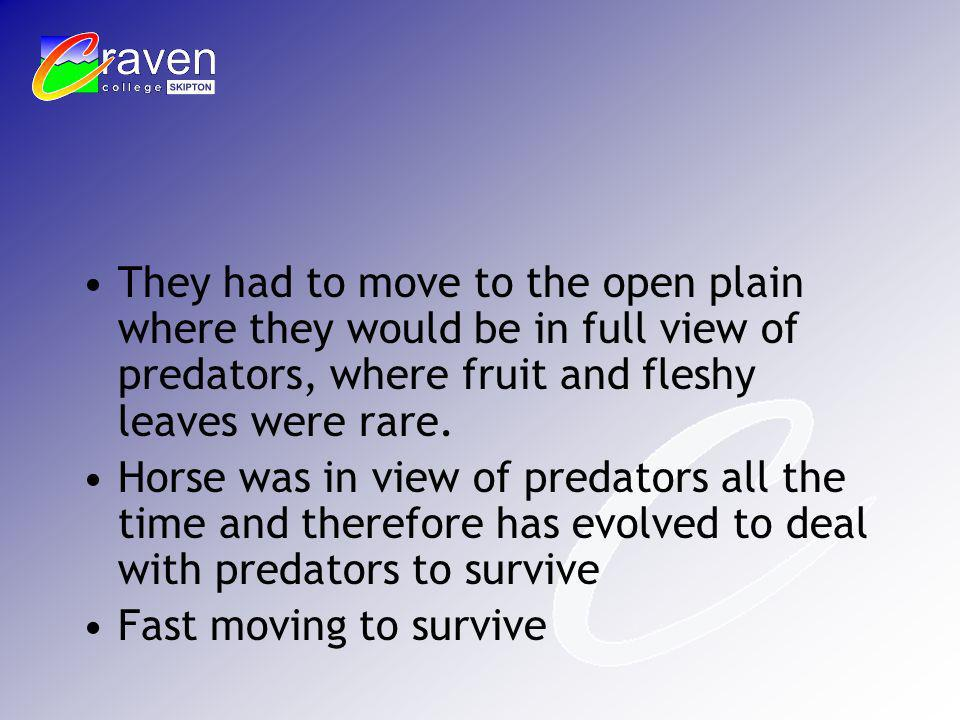 They had to move to the open plain where they would be in full view of predators, where fruit and fleshy leaves were rare. Horse was in view of predat