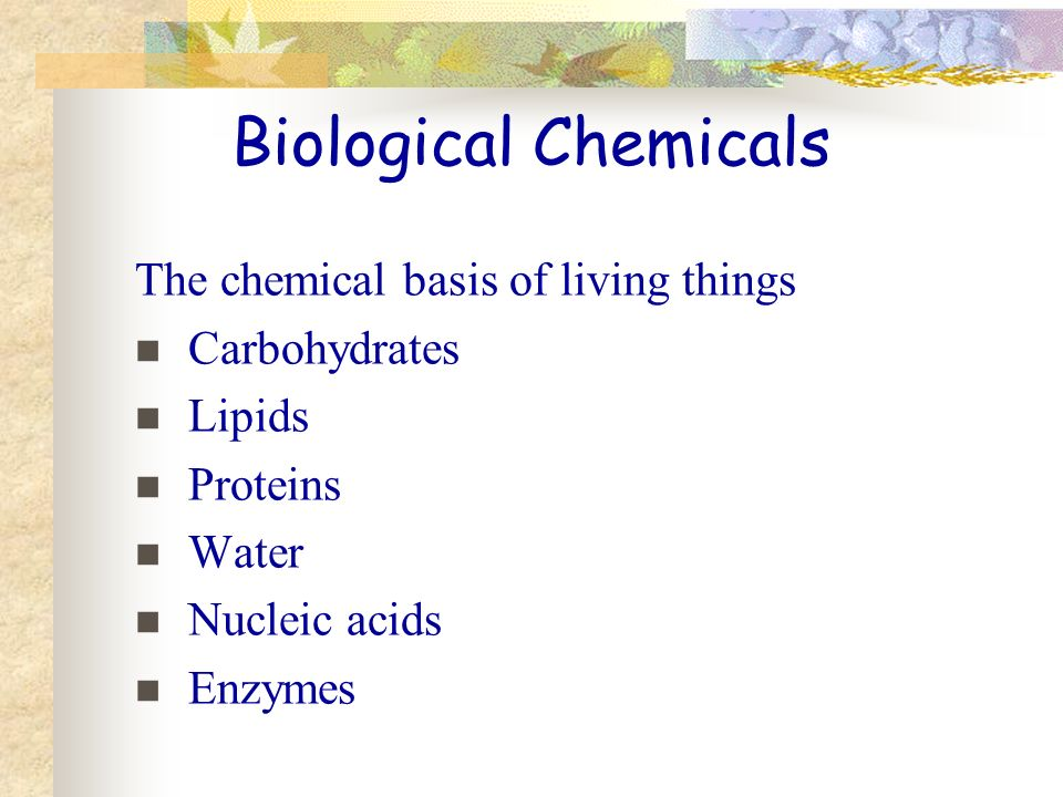 Biological Chemicals The chemical basis of living things Carbohydrates Lipids Proteins Water Nucleic acids Enzymes