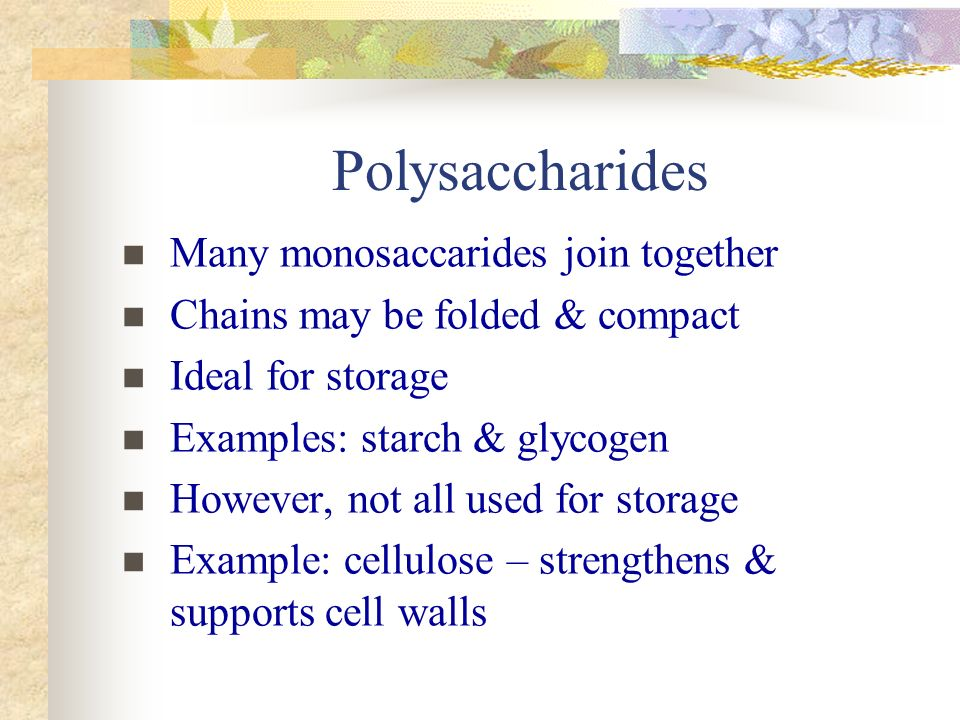 Polysaccharides Many monosaccarides join together Chains may be folded & compact Ideal for storage Examples: starch & glycogen However, not all used for storage Example: cellulose – strengthens & supports cell walls