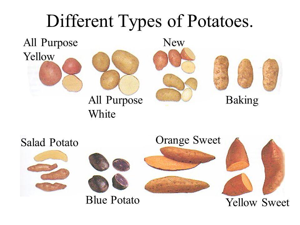 Different Types of Potatoes. All Purpose Yellow New All Purpose White Baking Salad Potato Blue Potato Orange Sweet Yellow Sweet