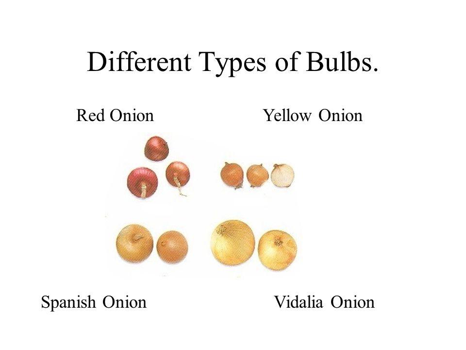 Different Types of Bulbs. Red OnionYellow Onion Spanish OnionVidalia Onion