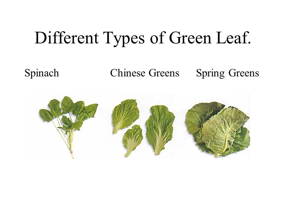 Different Types of Green Leaf. SpinachChinese Greens Spring Greens