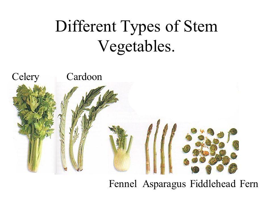 Different Types of Stem Vegetables. Fennel Asparagus Fiddlehead Fern Celery Cardoon