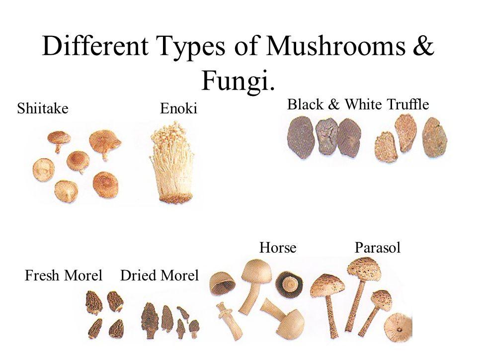Different Types of Mushrooms & Fungi. ShiitakeEnoki Black & White Truffle Fresh Morel Dried Morel HorseParasol