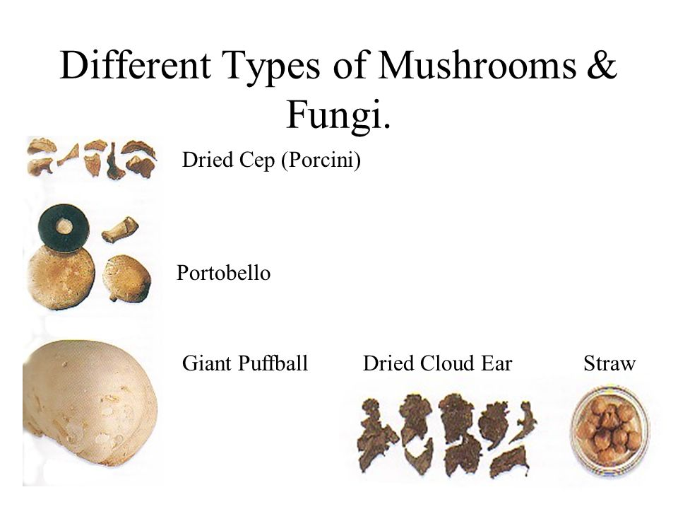 Different Types of Mushrooms & Fungi. Dried Cep (Porcini) Portobello Giant Puffball Dried Cloud Ear Straw