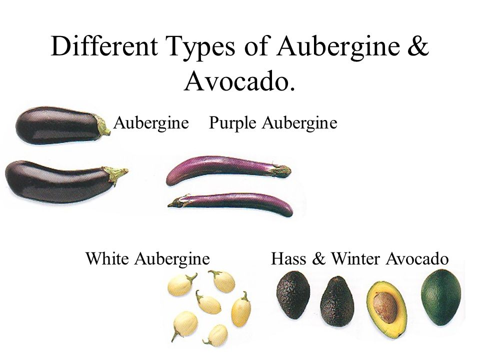 Different Types of Aubergine & Avocado. AuberginePurple Aubergine White Aubergine Hass & Winter Avocado