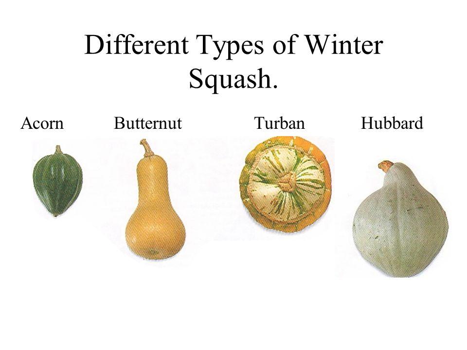Different Types of Winter Squash. AcornButternutTurban Hubbard