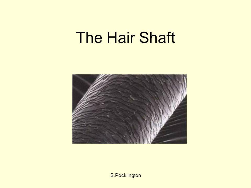 S.Pocklington The Hair Shaft