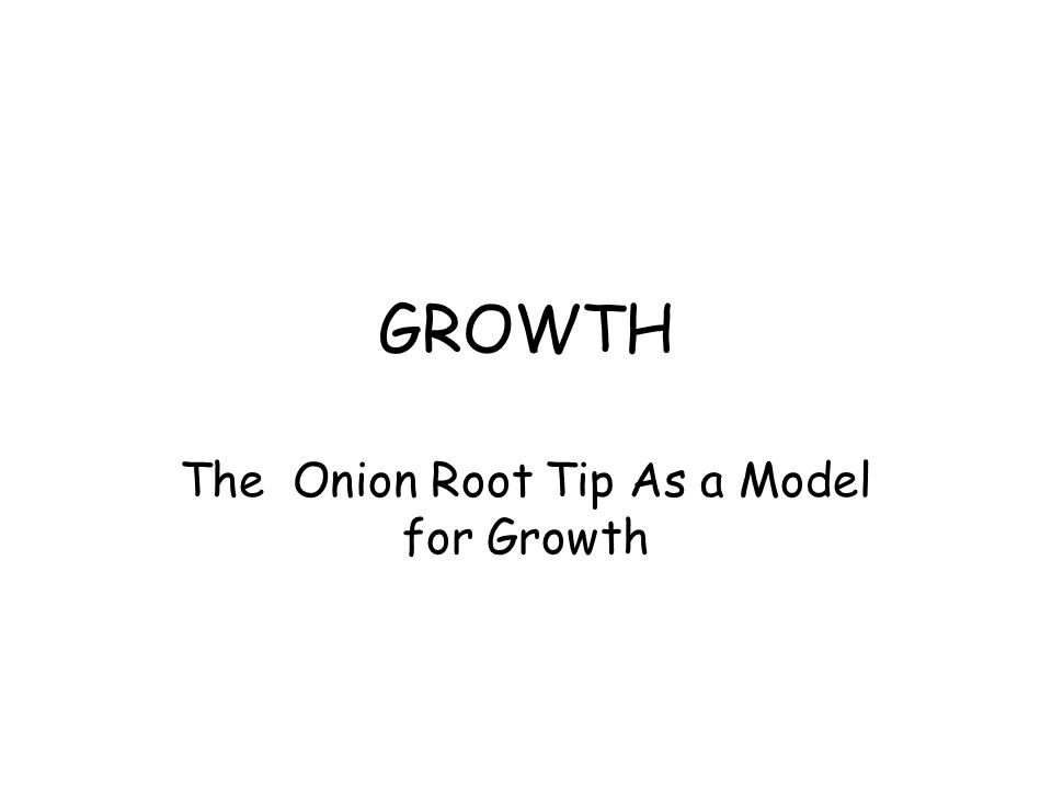 GROWTH The Onion Root Tip As a Model for Growth