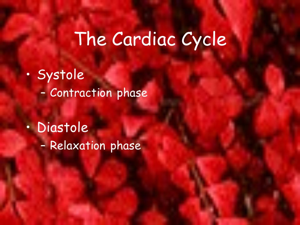 The Cardiac Cycle Systole –Contraction phase Diastole –Relaxation phase