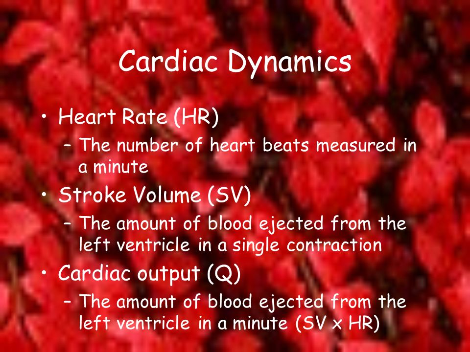 Cardiac Dynamics Heart Rate (HR) –The number of heart beats measured in a minute Stroke Volume (SV) –The amount of blood ejected from the left ventric