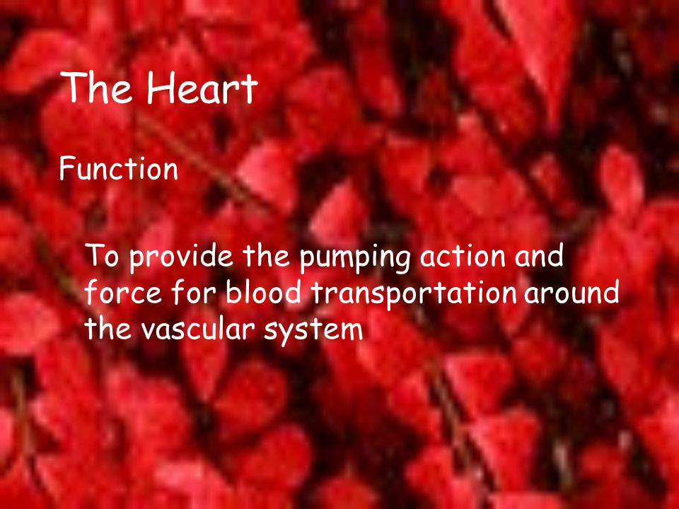 The Heart Function To provide the pumping action and force for blood transportation around the vascular system