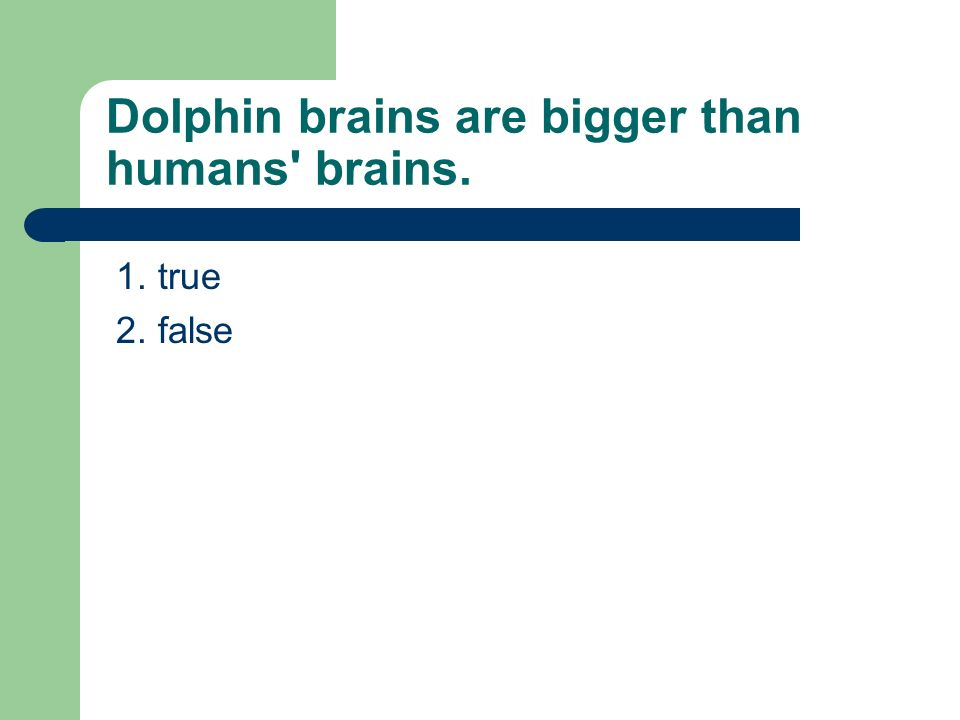Dolphin brains are bigger than humans brains. 1. true 2. false