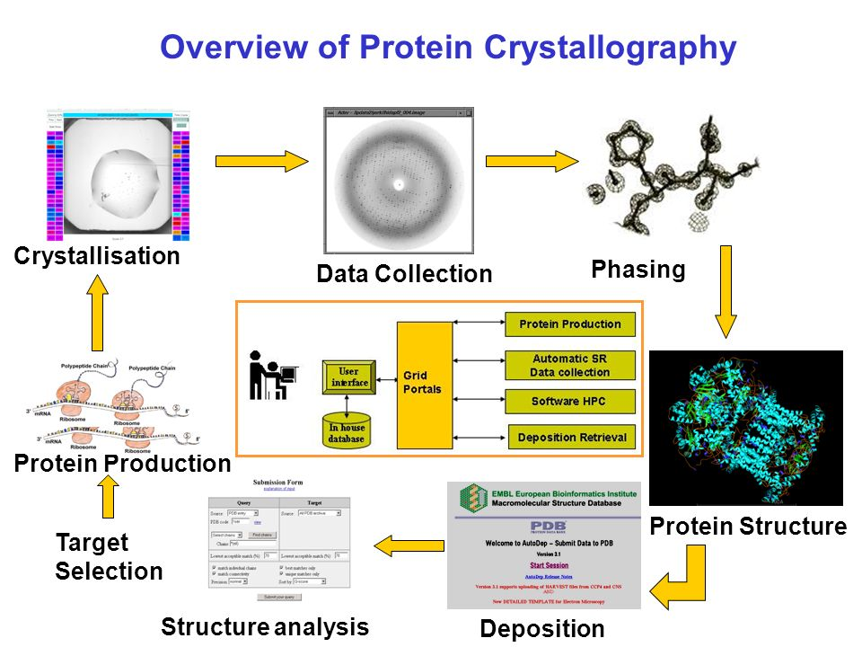 Protein Production Crystallisation Data Collection Phasing Protein Structure Deposition Structure analysis Target Selection Overview of Protein Crystallography