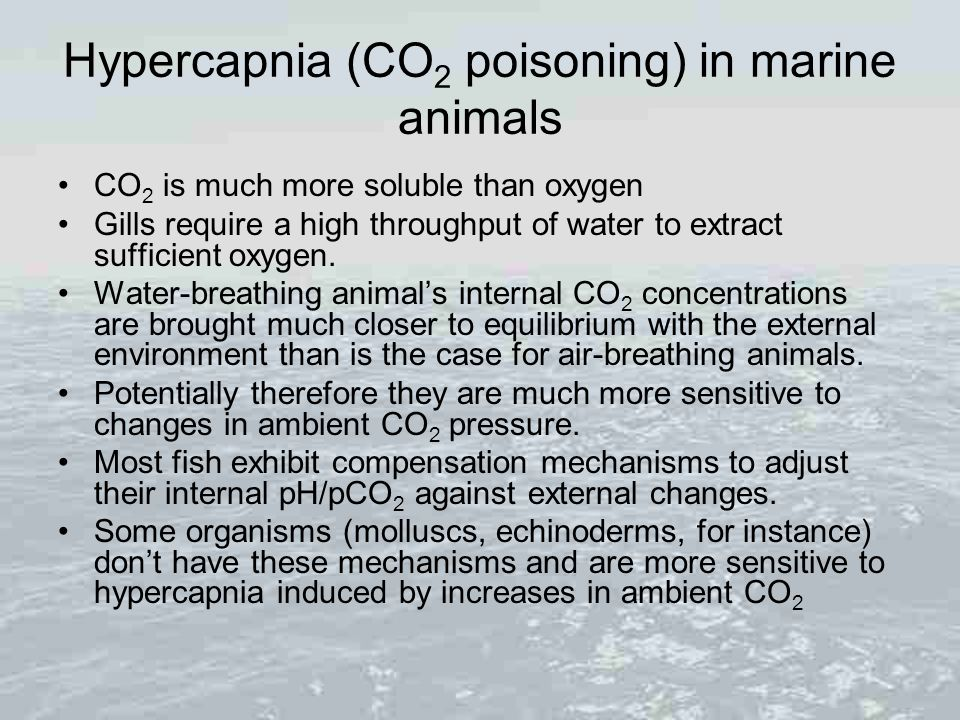 Hypercapnia (CO 2 poisoning) in marine animals CO 2 is much more soluble than oxygen Gills require a high throughput of water to extract sufficient ox