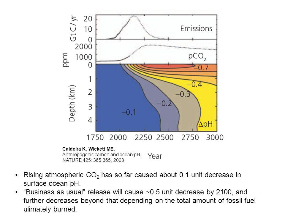 Caldeira K, Wickett ME, Anthropogenic carbon and ocean pH, NATURE 425: 365-365, 2003 Rising atmospheric CO 2 has so far caused about 0.1 unit decrease