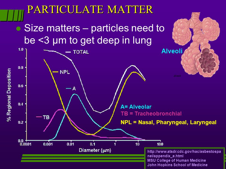 l Size matters – particles need to be <3 μm to get deep in lung http://www.atsdr.cdc.gov/hac/asbestospa nel/appendix_e.html MSU College of Human Medic