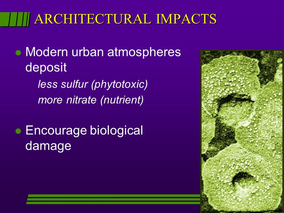 ARCHITECTURAL IMPACTS l Modern urban atmospheres deposit less sulfur (phytotoxic) more nitrate (nutrient) l Encourage biological damage