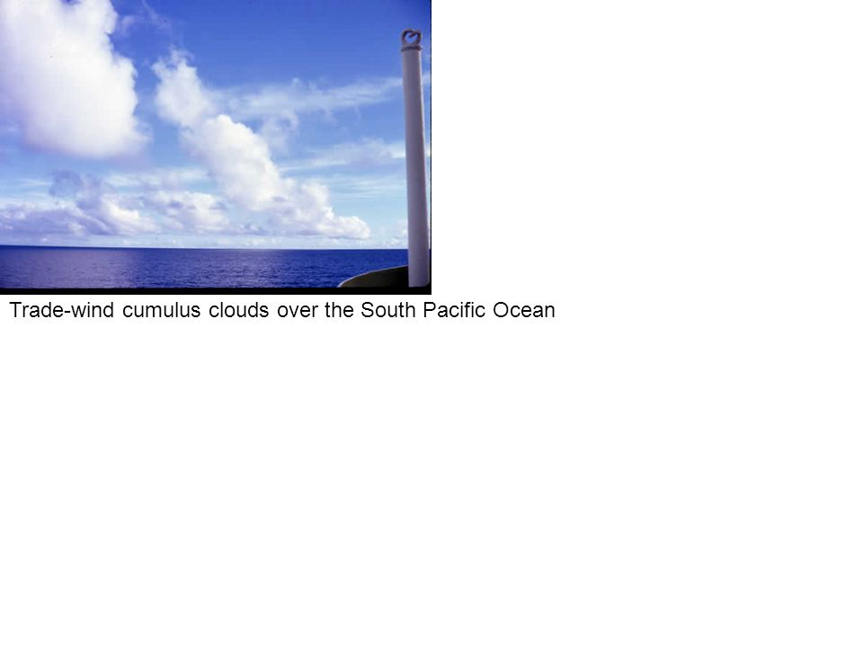 Trade-wind cumulus clouds over the South Pacific Ocean