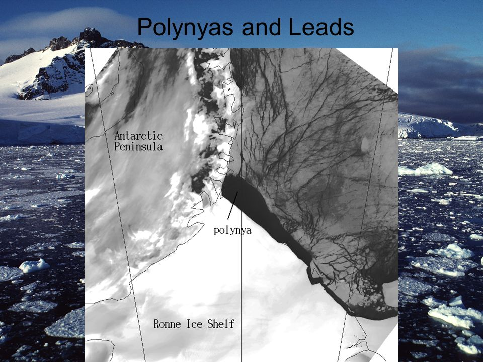 Polynyas and Leads