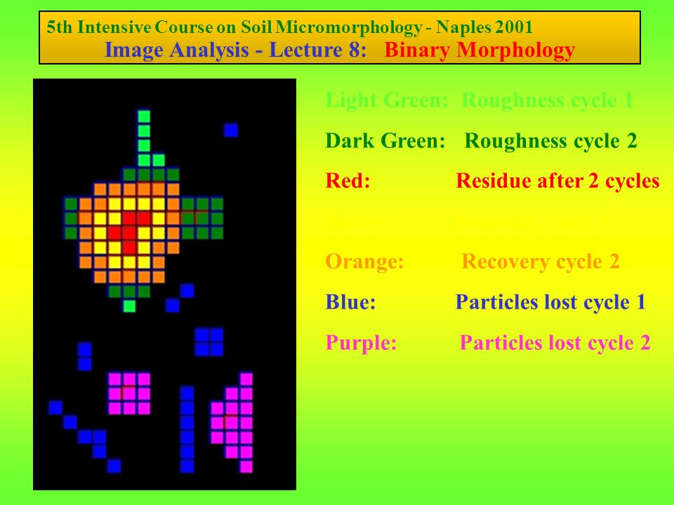 5th Intensive Course on Soil Micromorphology - Naples 2001 Image Analysis - Lecture 8: Binary Morphology Light Green: Roughness cycle 1 Dark Green: Roughness cycle 2 Red: Residue after 2 cycles Yellow: Recovery cycle 1 Orange: Recovery cycle 2 Blue: Particles lost cycle 1 Purple: Particles lost cycle 2