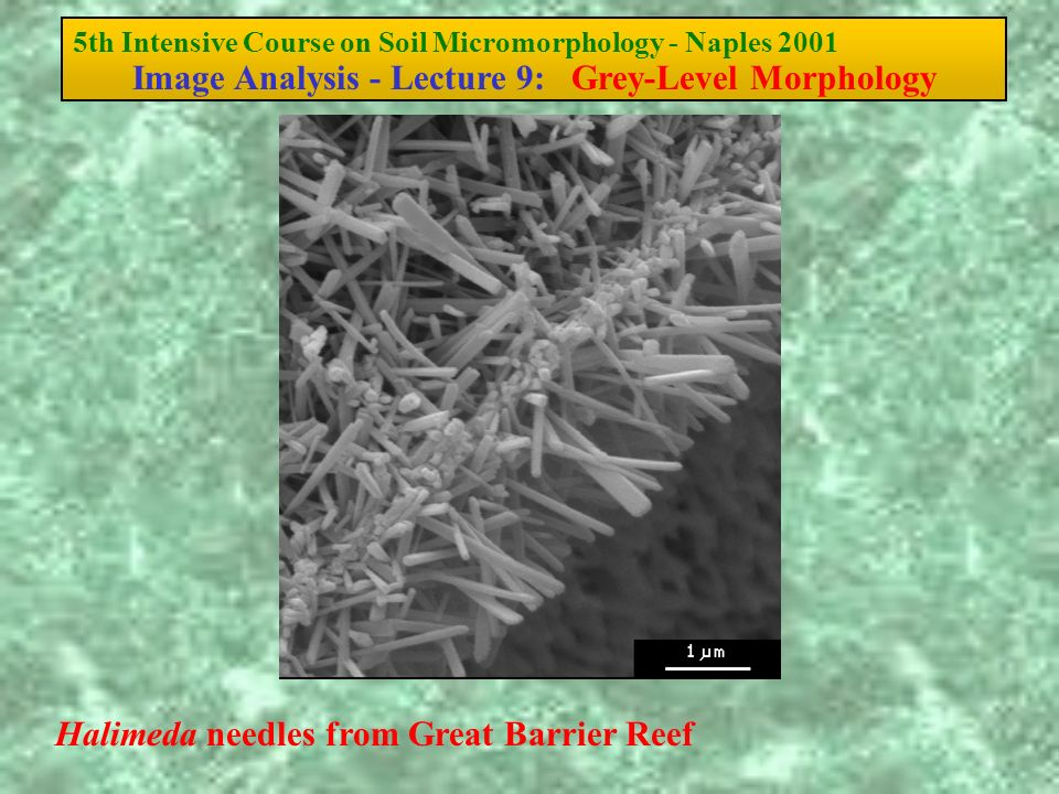 5th Intensive Course on Soil Micromorphology - Naples 2001 Image Analysis - Lecture 9: Grey-Level Morphology Halimeda needles from Great Barrier Reef