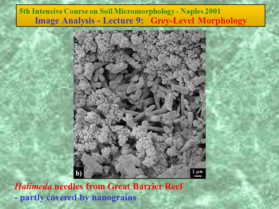 5th Intensive Course on Soil Micromorphology - Naples 2001 Image Analysis - Lecture 9: Grey-Level Morphology Halimeda needles from Great Barrier Reef - partly covered by nanograins
