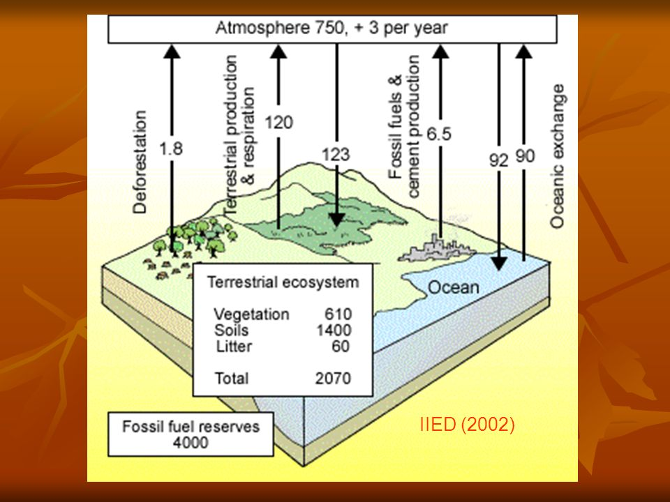 Carbon cycling on land 270 PgC/yr dissolved in leaf water ~ 1/3 atmospheric C 120PgC/yr fixed through Photosynthesis = Gross Primary Productivity 60Pg/yr plant growth = Net Primary Productivity 60Pg/yr Respired by plants >½ directly released to atmosphere