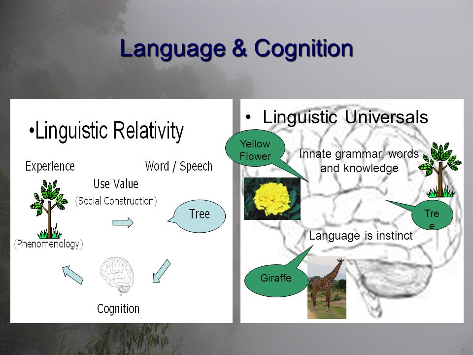 Language & Cognition Linguistic Universals Innate grammar, words and knowledge Tre e Yellow Flower Giraffe Language is instinct