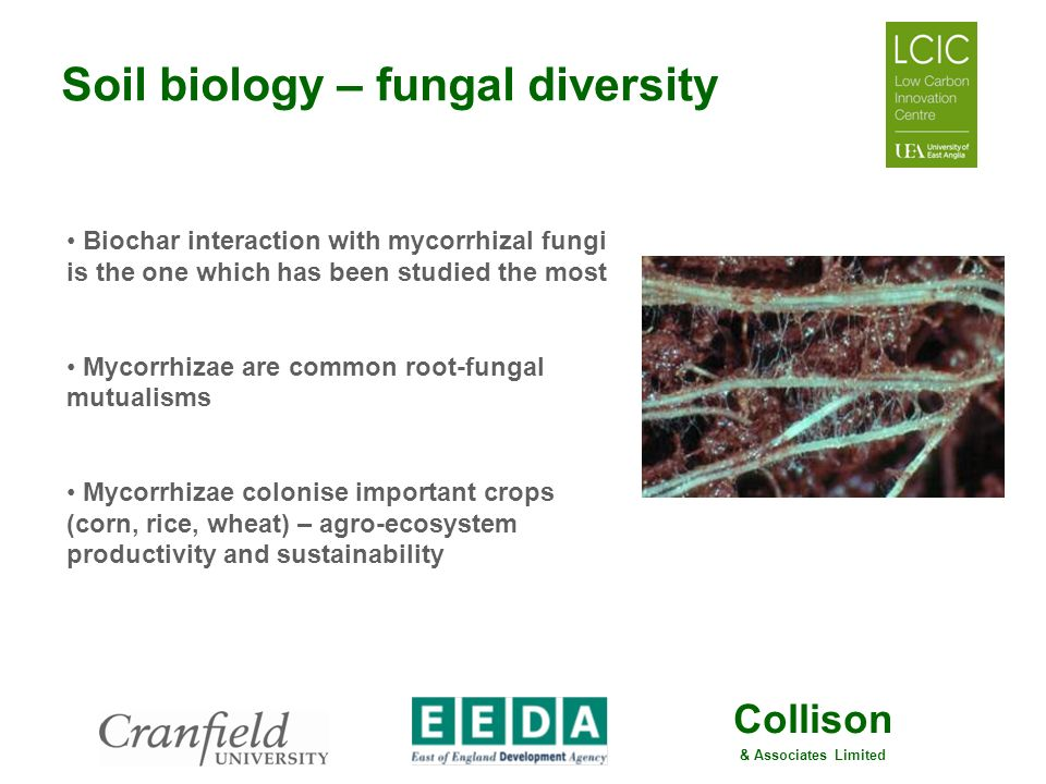 Collison & Associates Limited Soil biology – fungal diversity Biochar interaction with mycorrhizal fungi is the one which has been studied the most My