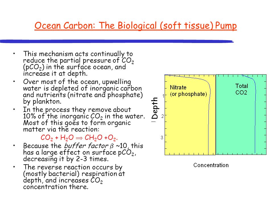 Ocean Carbon: The Biological (soft tissue) Pump This mechanism acts continually to reduce the partial pressure of CO 2 (pCO 2 ) in the surface ocean,