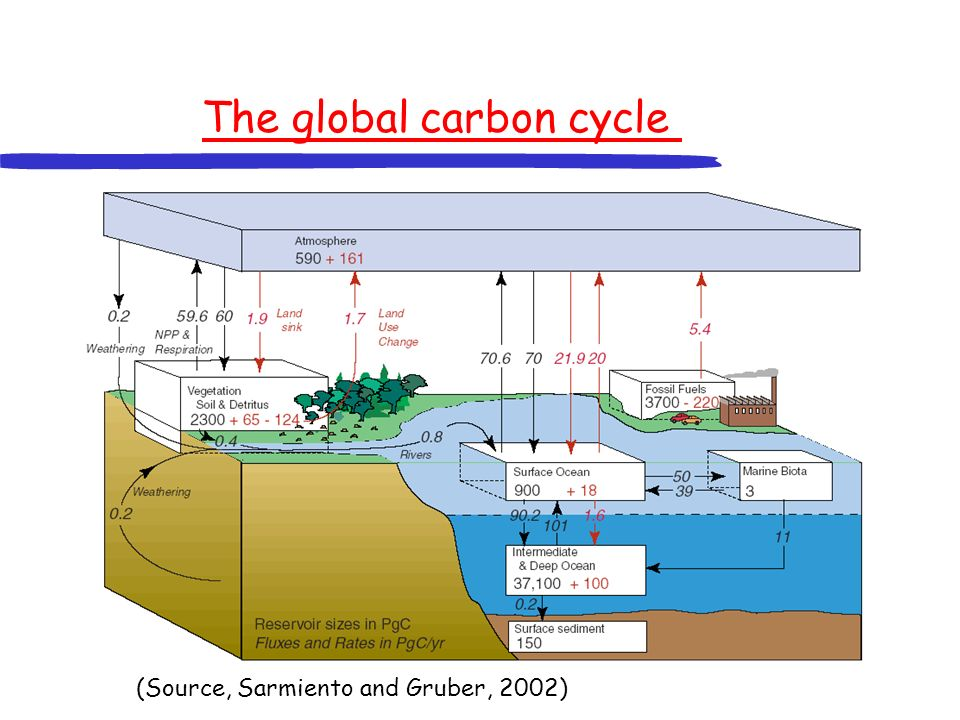 The global carbon cycle (Source, Sarmiento and Gruber, 2002)