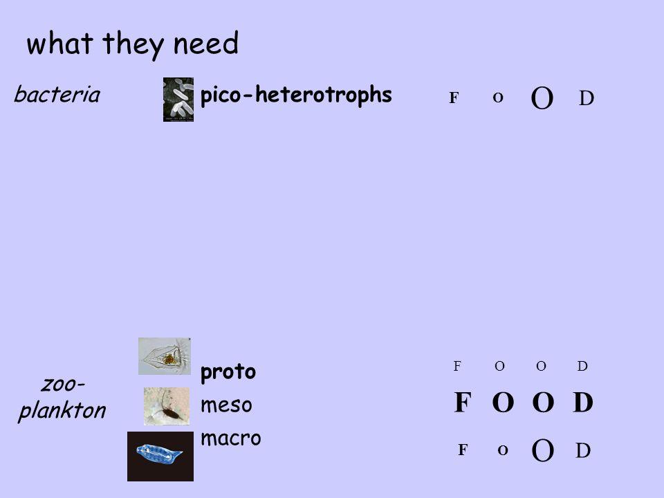 pico-heterotrophsbacteria zoo- plankton proto meso macro what they need FOOD F O O D FOOD F O O D