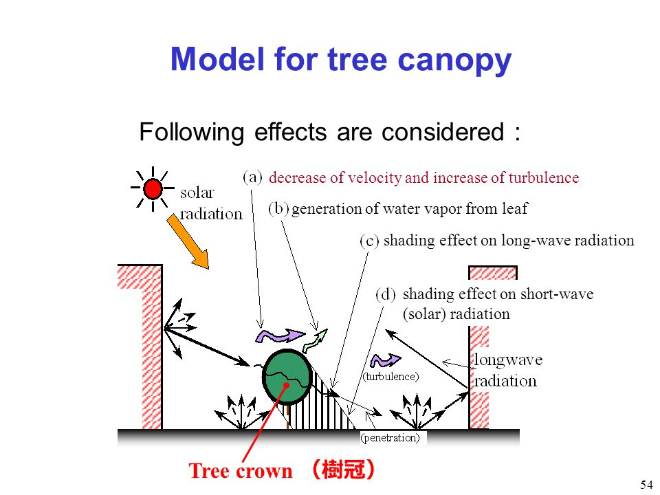 54 Following effects are considered : Model for tree canopy decrease of velocity and increase of turbulence generation of water vapor from leaf shadin