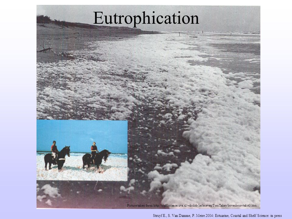 Picture taken from: http://staff.science.uva.nl/~dcslob/lesbrieven/TomTahey/bovenbouwtekst3.htm Eutrophication Struyf E., S.