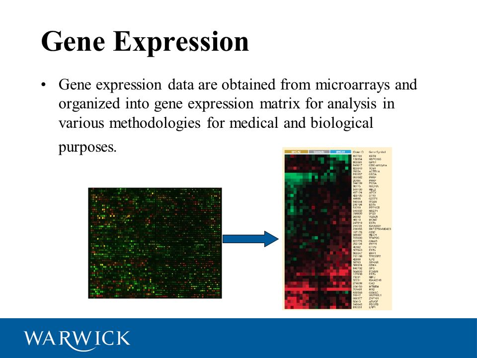 Gene Series Time Series A sequence of gene expression measured at successive time points at either uniform or uneven time intervals.