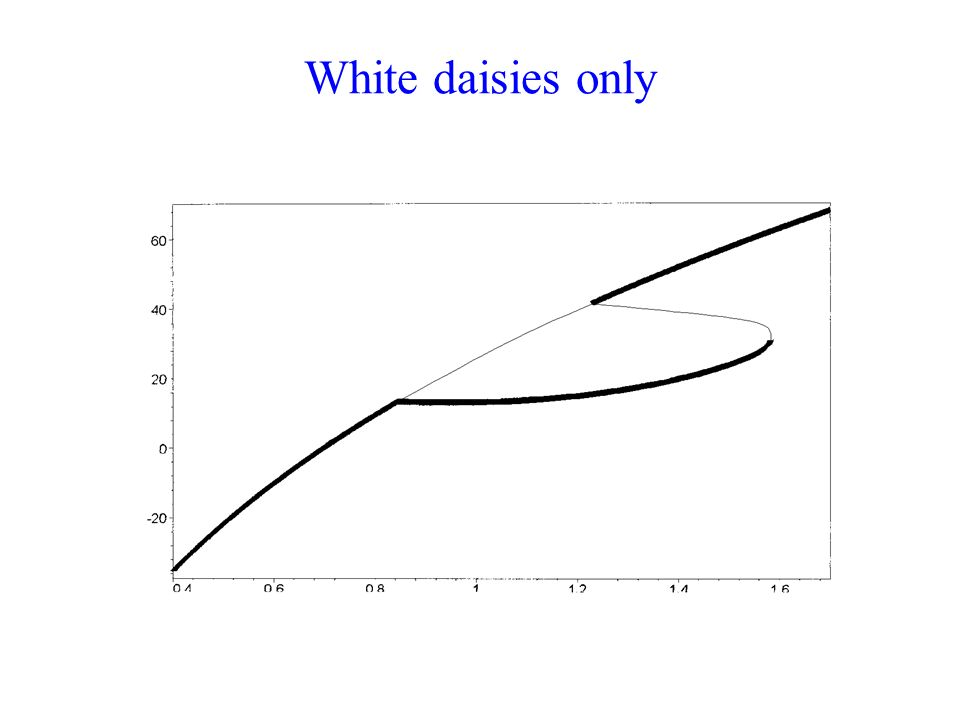 White daisies only
