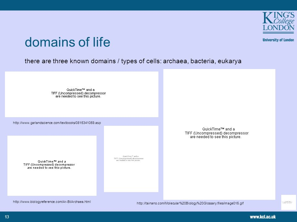 13 domains of life there are three known domains / types of cells: archaea, bacteria, eukarya