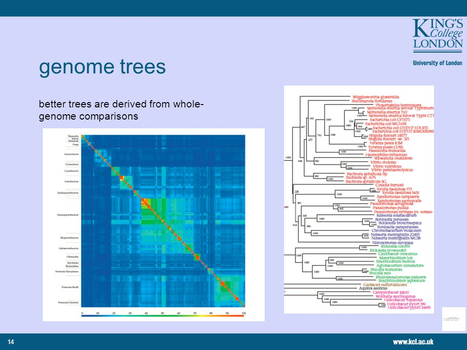 14 genome trees better trees are derived from whole- genome comparisons