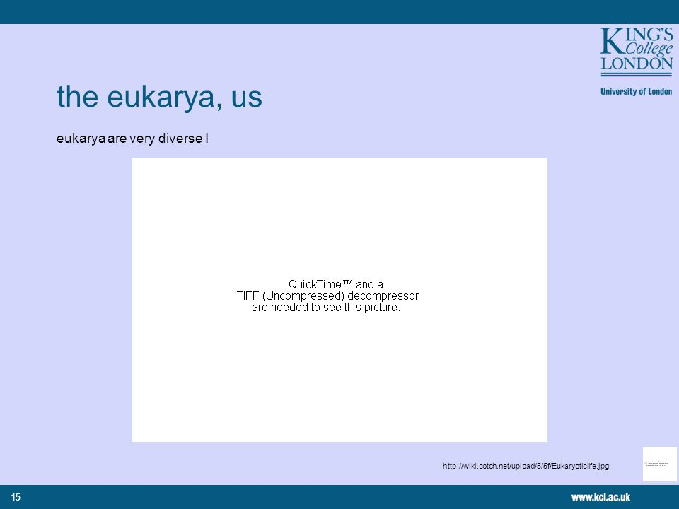 15 the eukarya, us eukarya are very diverse ! http://wiki.cotch.net/upload/5/5f/Eukaryoticlife.jpg
