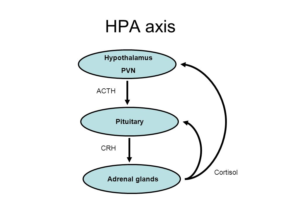 HPA axis Hypothalamus PVN Pituitary Adrenal glands ACTH CRH Cortisol