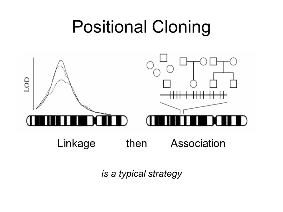 Positional Cloning Linkage thenAssociation is a typical strategy